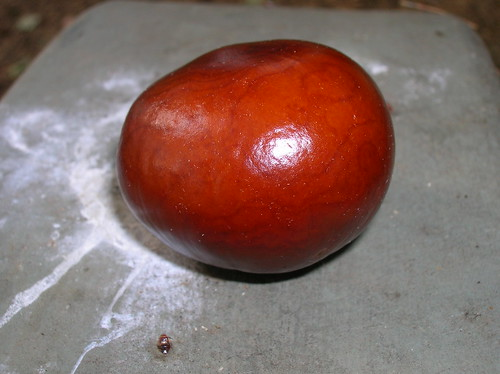 shiny chestnut