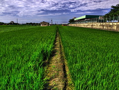 paths on farmland (Sherwin_andante) Tags: hdr 2007 e510 specnature colorphotoaward 200709 platinumheartaward