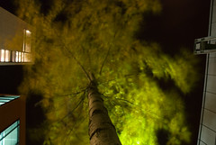 Trekrone (Jarle Ekanger) Tags: longexposure trees blur up night evening nightshot wind treetrunk gløshaugen realfagbygget ntnu indiansummer