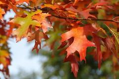 october (Dorel) Tags: oktober october octubre octobre outubro ottobre