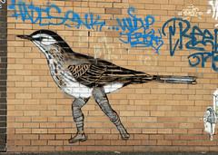 bird in boots