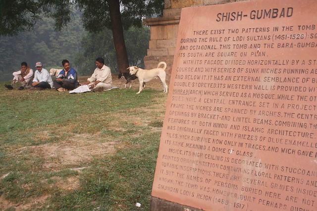Dog's Delhi
