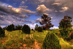 Landscape (Thad Roan - Bridgepix) Tags: trees sunlight color grass clouds landscape scenery colorado colorful denver wildflowers chatfield soe hdr yucca littleton naturesfinest blueribbonwinner photomatix 200706 abigfave flickrgold superaplus aplusphoto diamondclassphotographer flickrdiamond