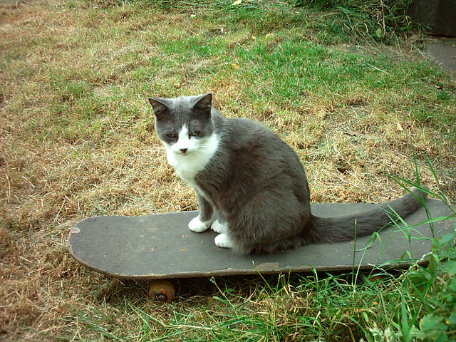 Skateboarding Kitty 2