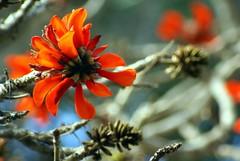 Flowers_046