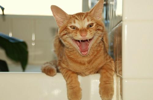 Gato diabólico