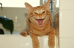 Boy I Love This Spa Bath (merriewells) Tags: cats freddie coolest flickrsbest cc100 abigfave lolcats wowiekazowie 500viewclub 400viewclub coolestphotographers goldstaraward