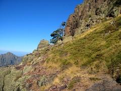 La vire de l'Andatone (Scaffone) versant Campu Razzinu Sud