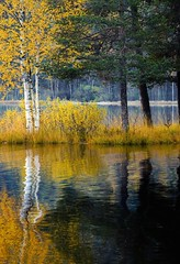 Autumn_trees (Voss-Nilsen) Tags: autumn trees lake tree nature water colors leaves yellow oslo norway canon reflections season norge seasons forrest hst sognsvann smrgsbord hsten rstider rstid aphotographersnature