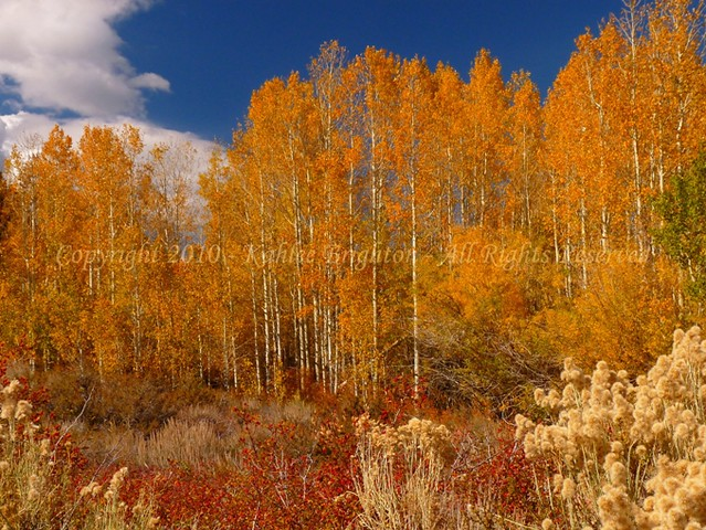 Autumn at Crowley Lake