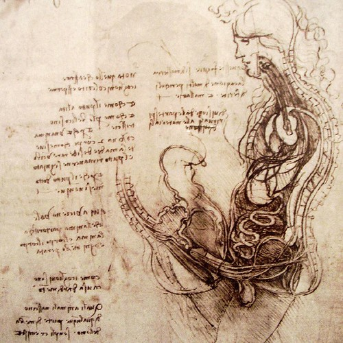 Leonardo da Vinci's Dissection of a Good Fuck