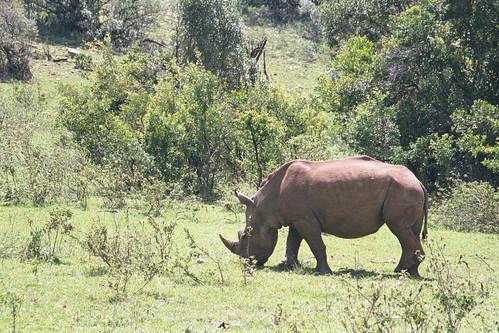 Mara Rhino2