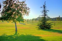 dusk (intention) Tags: park ca trees green grass canon los angeles dusk oaks hdr sherman 30d 3xp photomatix