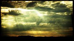 Homeward (Tarlyn) Tags: sunset beautiful birds landscape interesting dramatic journey electricity sunrays pylons mywinners diamondclassphotographer flickrdiamond blackribbonbeauty howwearenow throughthelondontoleedstrainwindow boopsiethisisforyou thankyougrandpaul thankyouantonioforthettv