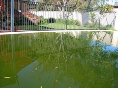 a neglected swimming pool ... okay it was mine last year... before we got a pool boy