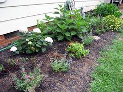 perennial garden 8 2007