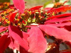 flor (Henrique César Multimídia) Tags: flores abelha inseto borboleta pardal aranha formiga lagartixa cigarra teiadearanha invertebrado enxame arapuá umpaisparatodos fotosmacro