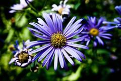 abierta ( Ms bello que el silencio ) Tags: flor vegetal cruzadas enfoqueselectivo ltytr2 ltytr1 a3b 6retos6 fotoconcursos
