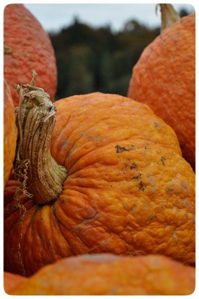 Craven's-pumpkins