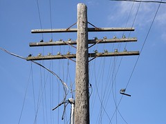 Old telegraph pole with insulators, Lockport IL (stoneofzanzibar) Tags: telegraphpole telegraph insulators telegraphwires