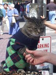 fundraising cat