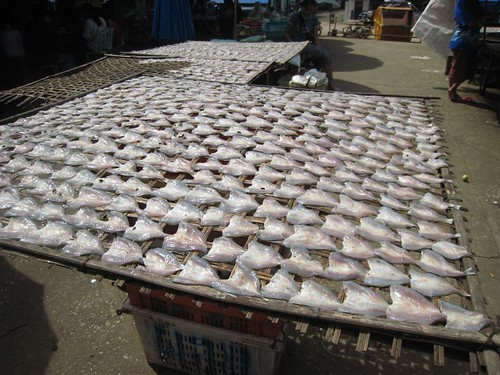 Fish, drying
