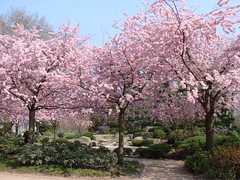 Hamburg Planten & Bloomen (hsv-chris16) Tags: park hamburg planten frühling blüten bloomen zierkirschen