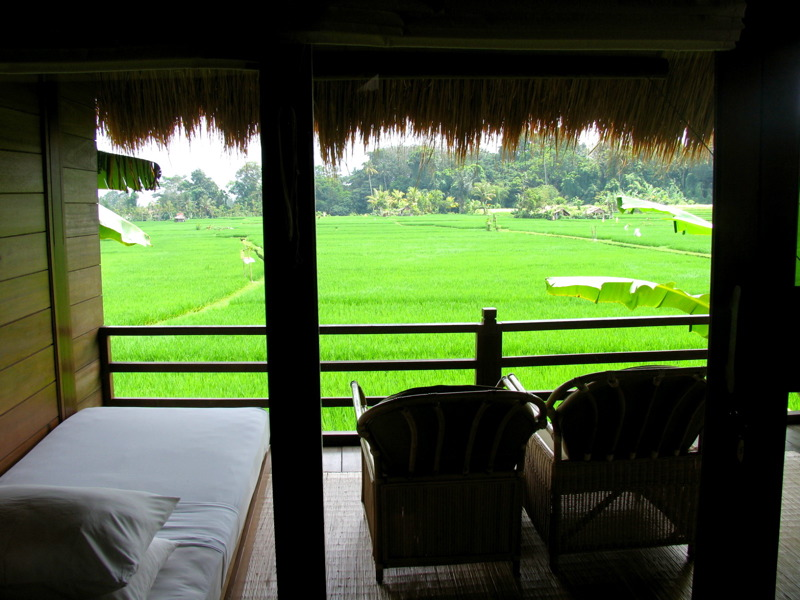 View of the rice paddies from our room at Tegal Sari