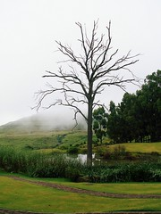 One with nature. (eyetoafrica) Tags: africa trees mist mountain green water grass dam south bark naturesfinest drakensburg