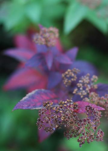 Autumn Colours -2