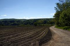 Ahern's Farm #2 (Crick3) Tags: field john corn farm nh charlestown ahern