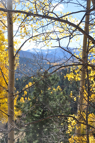 Wheeler Peak through the trees