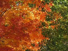 Autumn Colors (deu49097) Tags: autumn color leaves