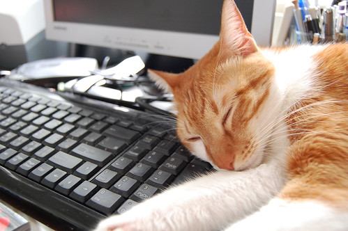 貓在鍵盤上睡著了