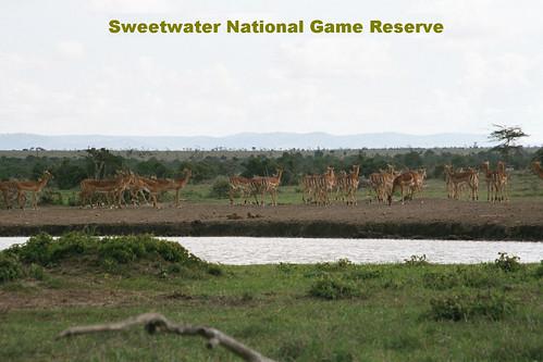 SW Antelopes Playing