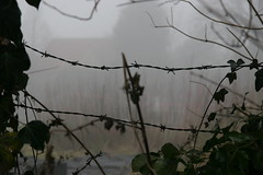 barbed wire in the mist