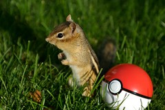 What!? (powerpig) Tags: chipmunk pokemon buddimon normalground buddirisu