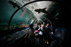 Shark tunnel (Lil [Kristen Elsby]) Tags: fish topf25 water topv2222 aquarium shark tank sydney australia wideangle tunnel darlingharbour sharks australasia oceania sydneyaquarium wobbegong wobbegonshark