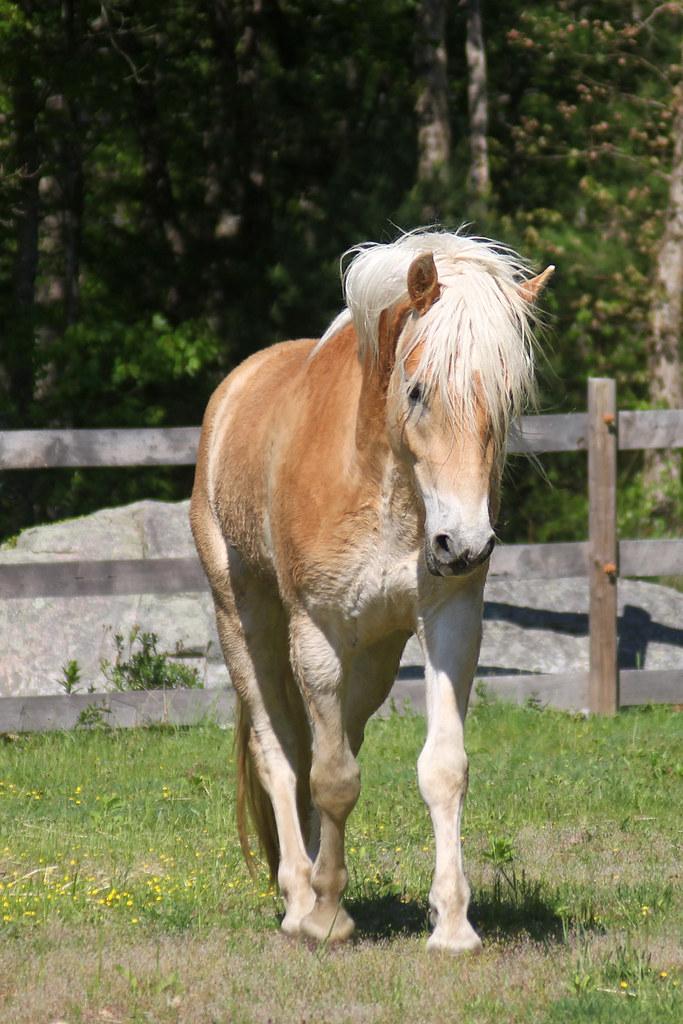 horses 232x