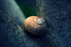Nobody Knows My Pain (*Les Hirondelles* Photography) Tags: italy macro tree texture nature animals werewolf canon dark italian poetry italia bokeh song slug minimalism catpower italiano eos400d macrodetails flickrawardgallery leshirondellesphotography