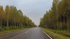 spiken (Sexy Swedish Babe) Tags: road travel trees rain ahead weather finland bad birch 169 österbotten björkar spiken riksväg8