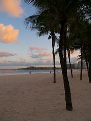 Copacabana (Leonardo Martins) Tags: sea brazil praia beach nature rio brasil riodejaneiro lumix mar bresil brasilien palm panasonic copacabana exotic tropical g2 brésil palmeira sudeste