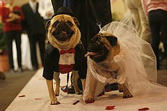 The doggie bridegroom and bride
