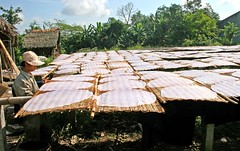 Rice noodles drying in the sun (tigri) Tags: light shadow food sun asia rice dry vietnam viet processing noodle southeast nam
