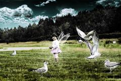 (mylaphotography) Tags: sky art birds fairytale wings crossprocess digitalart fantasy seabirds rahi childphotography jaber mylaphotography michiganstudiophotography fairytalephotography