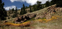 Little Scene (Michelle Kerr) Tags: ilovenature colorado soe chaffeecounty