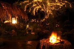 Warm (daniel.lih.photography) Tags: light tree lightbulb bulb night fire nikon long exposure taiwan 南投 台灣 松濤園 nantou d90 daniellih