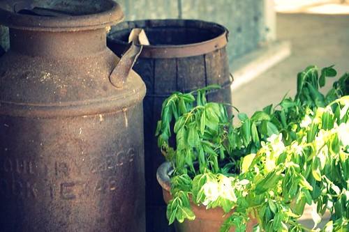 plant and barrels