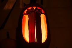 Longcat vs Tacgnol Pumpkin (Night)