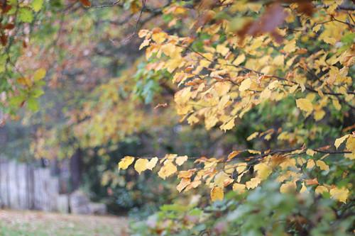 Fall11